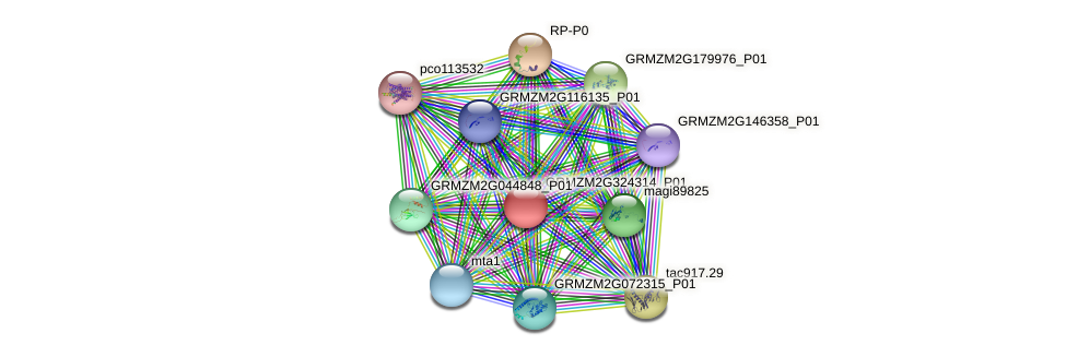 Zm.79462 protein (Zea mays) - STRING interaction network