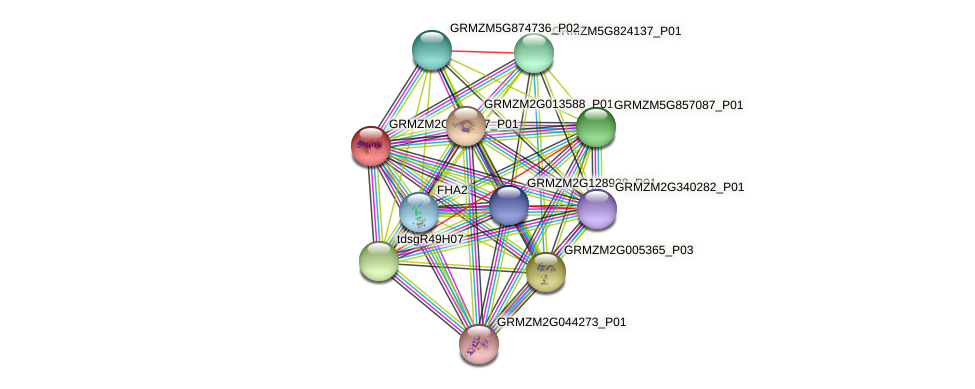 GRMZM2G324507_P01 protein (Zea mays) - STRING interaction network