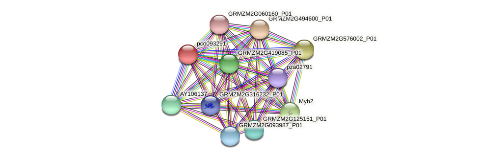 pco093291 protein (Zea mays) - STRING interaction network