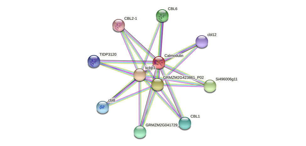 GRMZM2G324643_P01 protein (Zea mays) - STRING interaction network