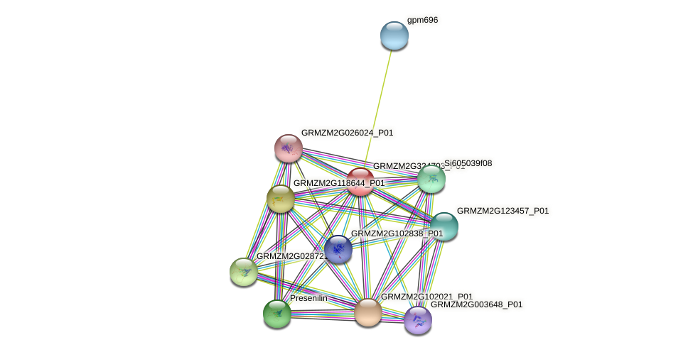 GRMZM2G324703_P01 protein (Zea mays) - STRING interaction network