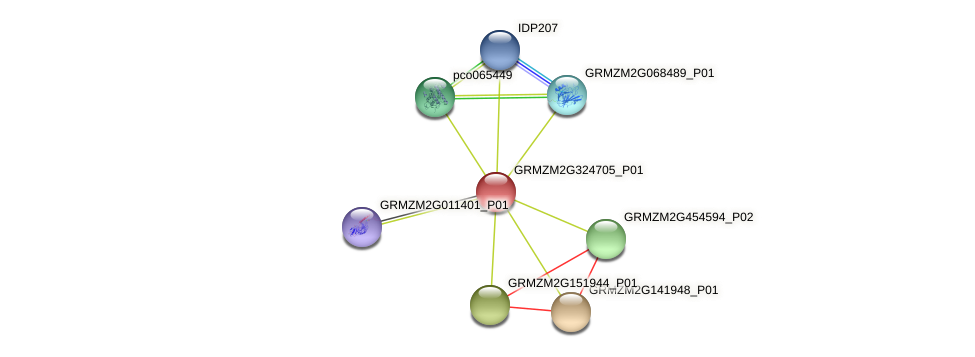 GRMZM2G324705_P01 protein (Zea mays) - STRING interaction network