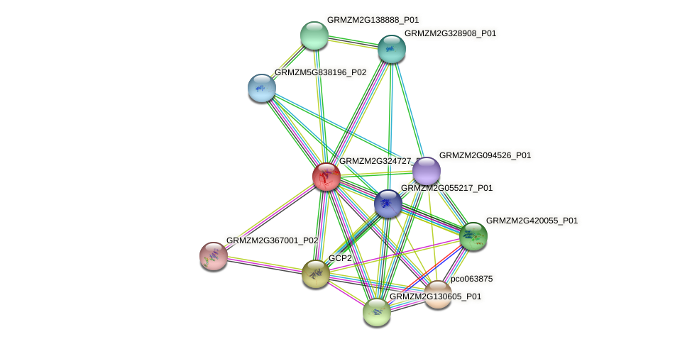 GRMZM2G324727_P01 protein (Zea mays) - STRING interaction network