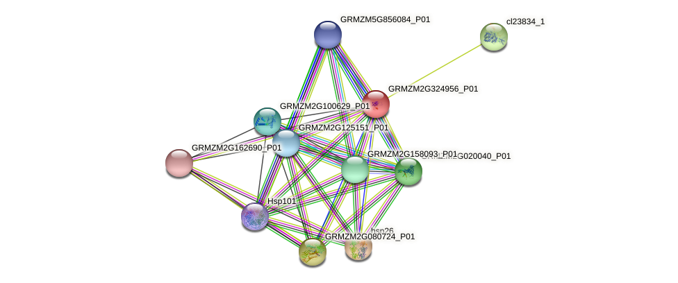 Zm.18018 protein (Zea mays) - STRING interaction network