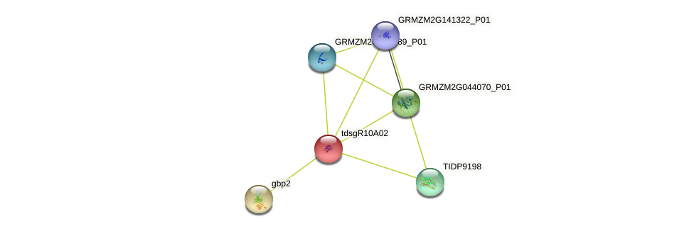 GRMZM2G325023_P01 protein (Zea mays) - STRING interaction network