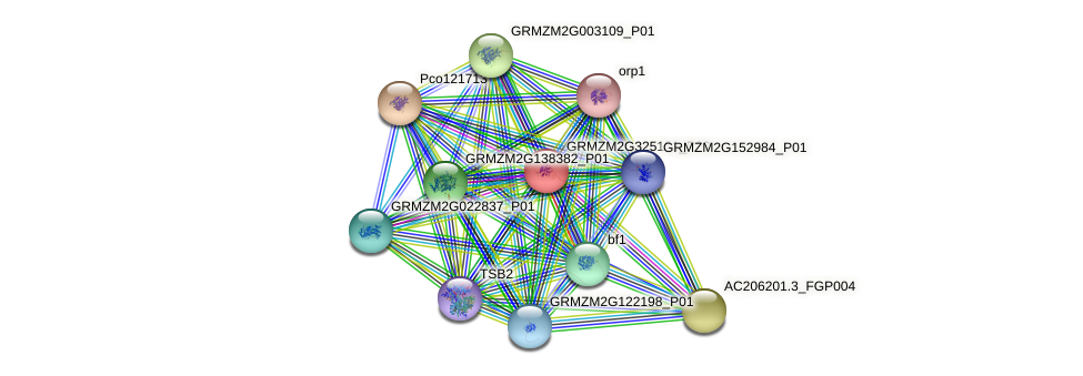 pco123247b protein (Zea mays) - STRING interaction network