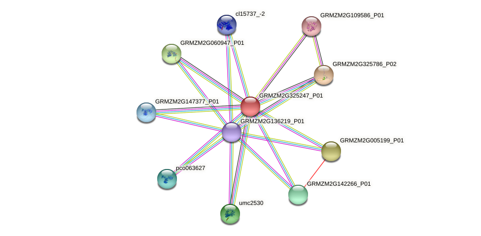 GRMZM2G325247_P01 protein (Zea mays) - STRING interaction network