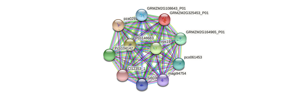 GRMZM2G325453_P01 protein (Zea mays) - STRING interaction network
