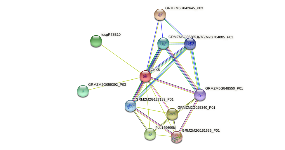 Zm.157849 protein (Zea mays) - STRING interaction network
