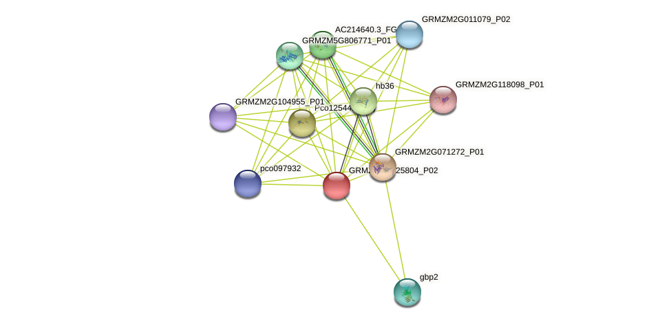 Zm.139199 protein (Zea mays) - STRING interaction network