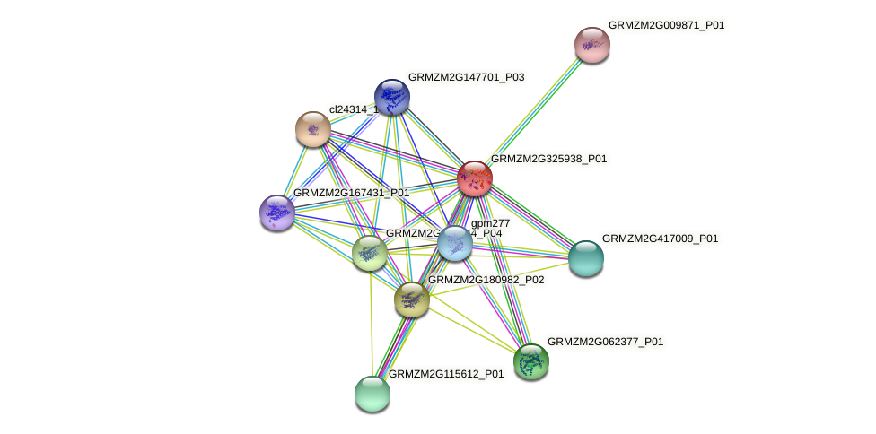 GRMZM2G325938_P01 protein (Zea mays) - STRING interaction network