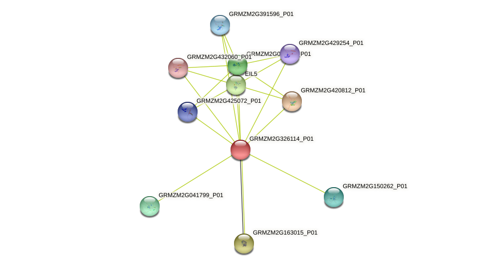 GRMZM2G326114_P01 protein (Zea mays) - STRING interaction network
