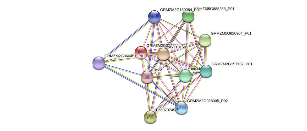 GRMZM2G326272_P01 protein (Zea mays) - STRING interaction network