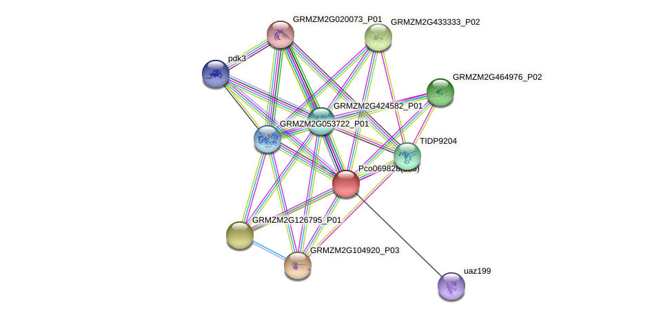 GRMZM2G326472_P03 protein (Zea mays) - STRING interaction network