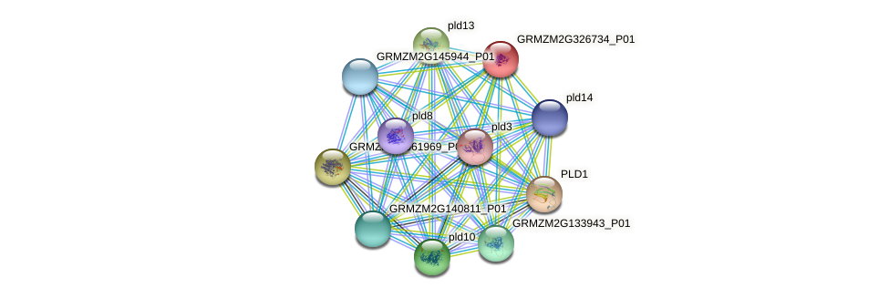 GRMZM2G326734_P01 protein (Zea mays) - STRING interaction network