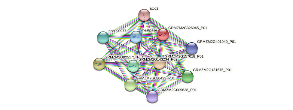 GRMZM2G326945_P01 protein (Zea mays) - STRING interaction network