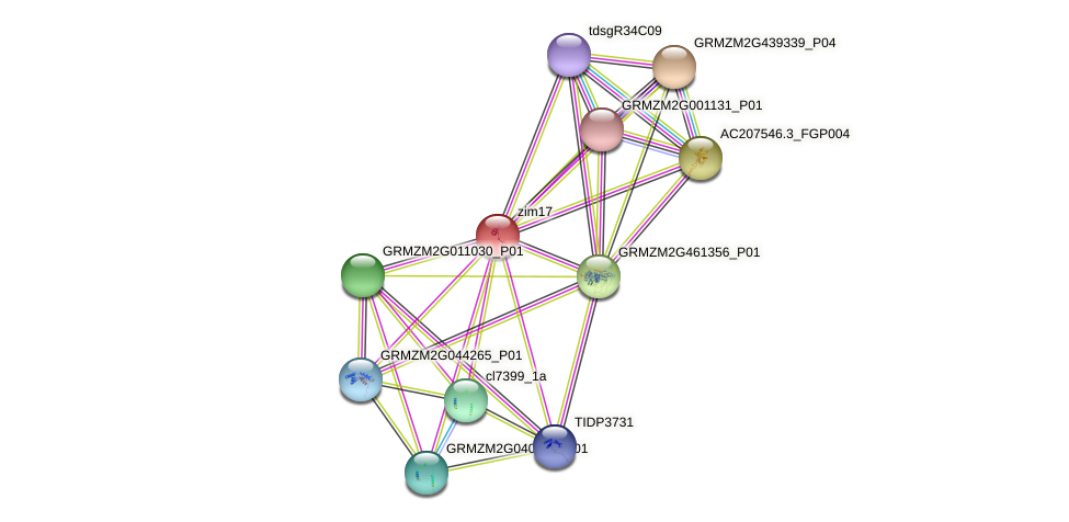 zim17 protein (Zea mays) - STRING interaction network
