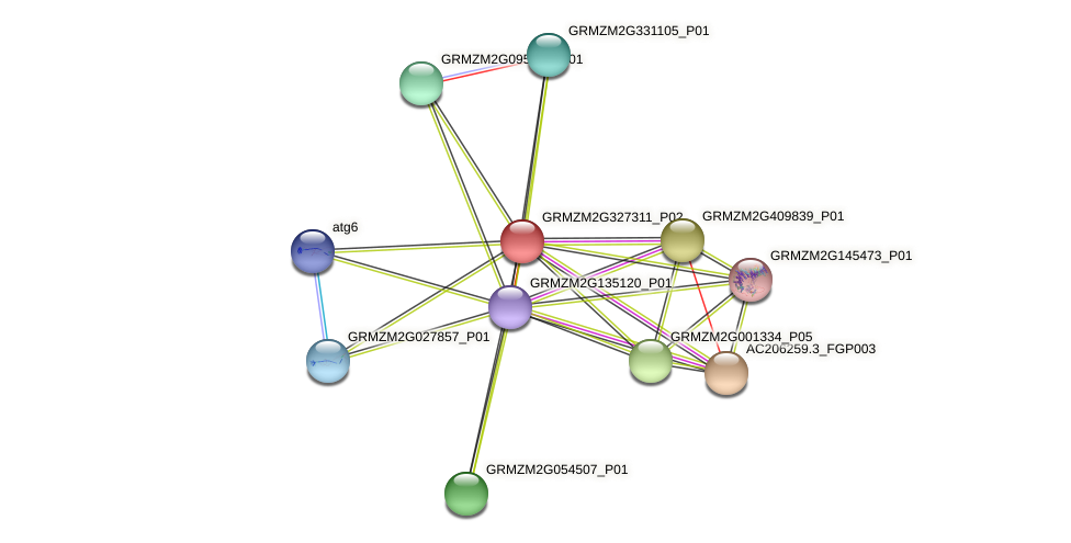 GRMZM2G327311_P02 protein (Zea mays) - STRING interaction network