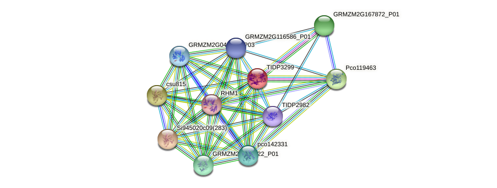 TIDP3299 protein (Zea mays) - STRING interaction network