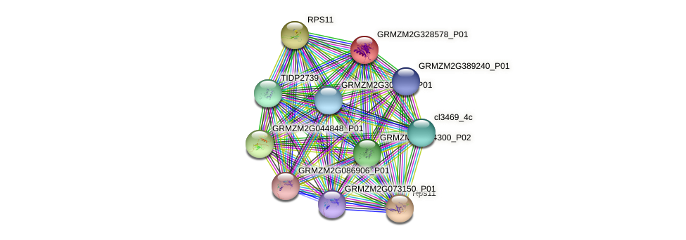 GRMZM2G328578_P01 protein (Zea mays) - STRING interaction network
