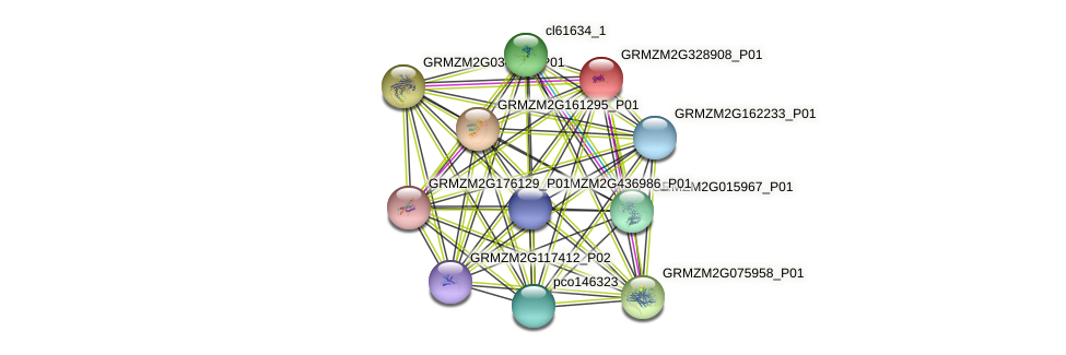 GRMZM2G328908_P01 protein (Zea mays) - STRING interaction network