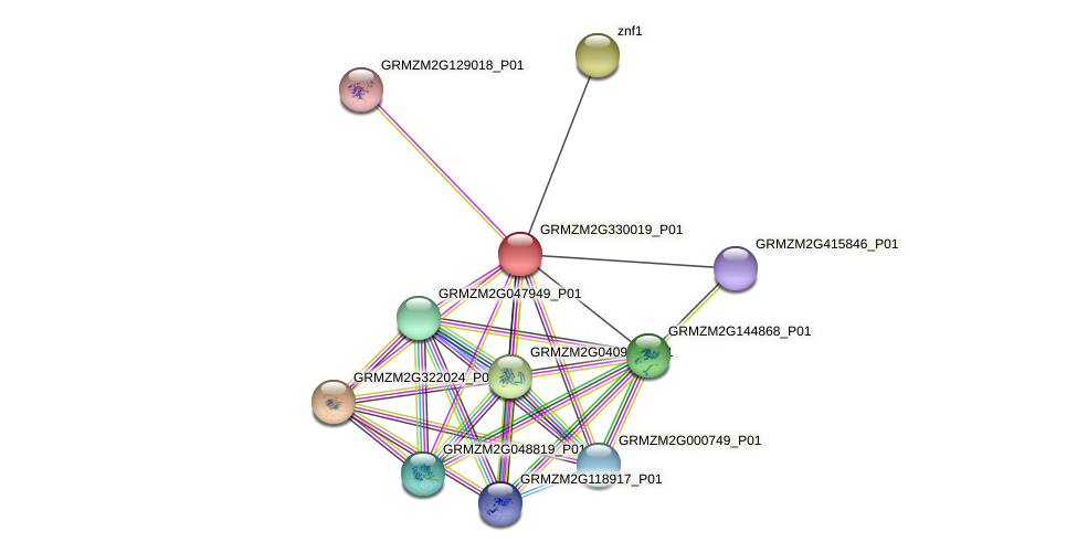 GRMZM2G330019_P01 protein (Zea mays) - STRING interaction network