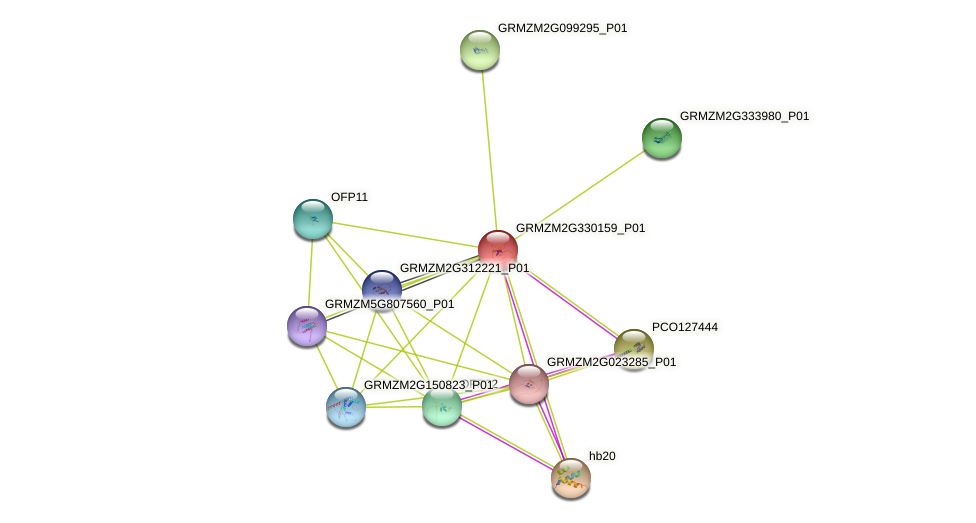 ofp16 protein (Zea mays) - STRING interaction network