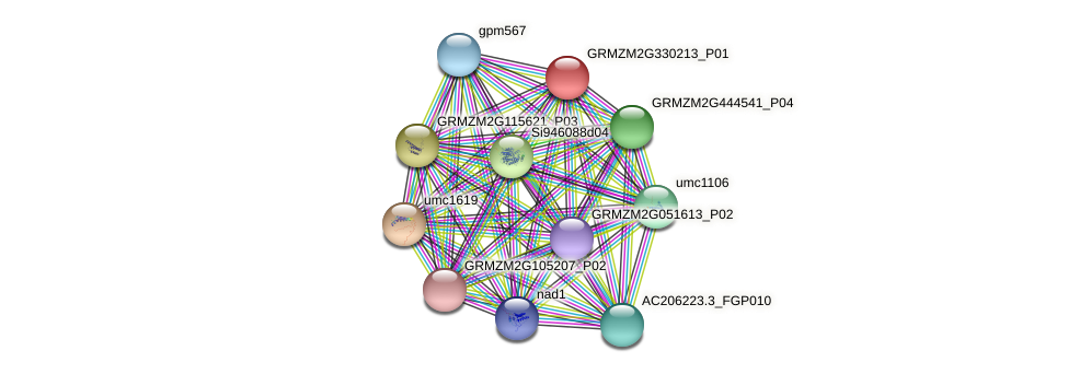 GRMZM2G330213_P01 protein (Zea mays) - STRING interaction network