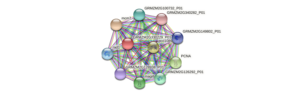 GRMZM2G330229_P01 protein (Zea mays) - STRING interaction network