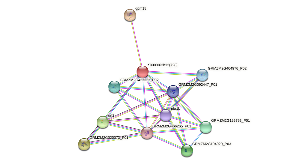 GRMZM2G330298_P01 protein (Zea mays) - STRING interaction network