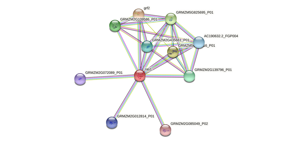 RAB2A protein (Zea mays) - STRING interaction network
