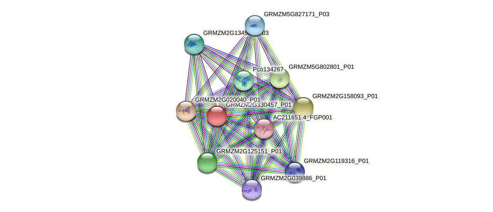 GRMZM2G330457_P01 protein (Zea mays) - STRING interaction network