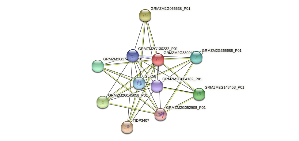 GRMZM2G330945_P01 protein (Zea mays) - STRING interaction network