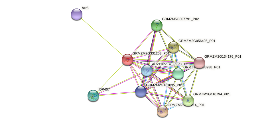 GRMZM2G331253_P01 protein (Zea mays) - STRING interaction network
