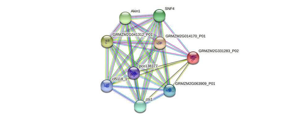 GRMZM2G331283_P02 protein (Zea mays) - STRING interaction network