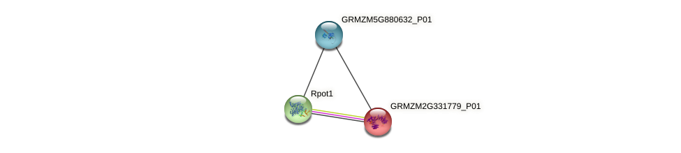 GRMZM2G331779_P01 protein (Zea mays) - STRING interaction network