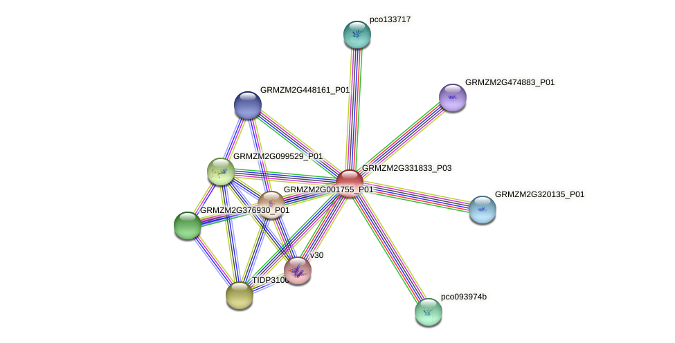 GRMZM2G331833_P03 protein (Zea mays) - STRING interaction network
