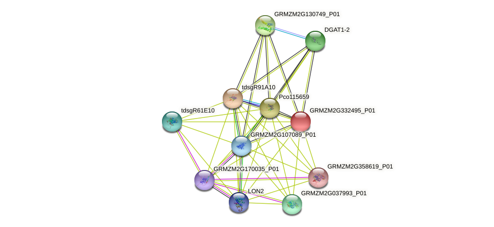 100279612 protein (Zea mays) - STRING interaction network