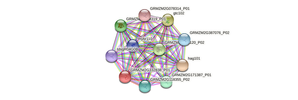 GRMZM2G332838_P01 protein (Zea mays) - STRING interaction network