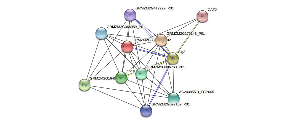 GRMZM2G333033_P02 protein (Zea mays) - STRING interaction network
