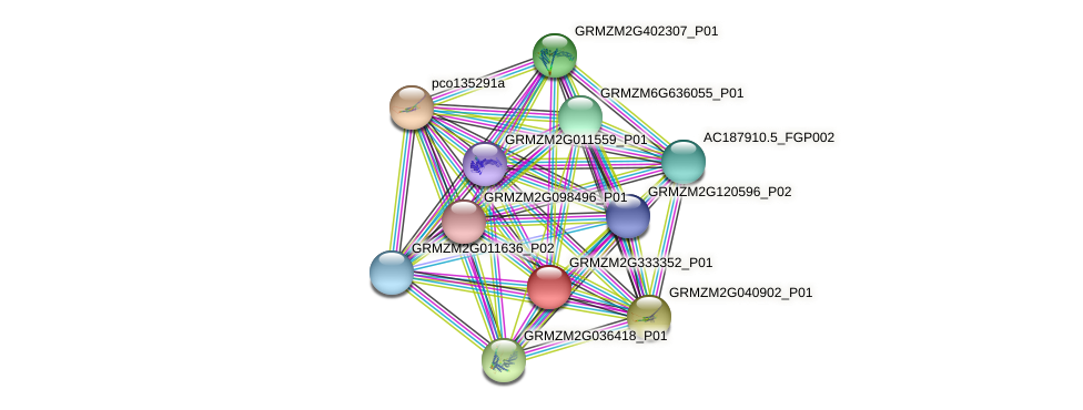 GRMZM2G333352_P01 protein (Zea mays) - STRING interaction network