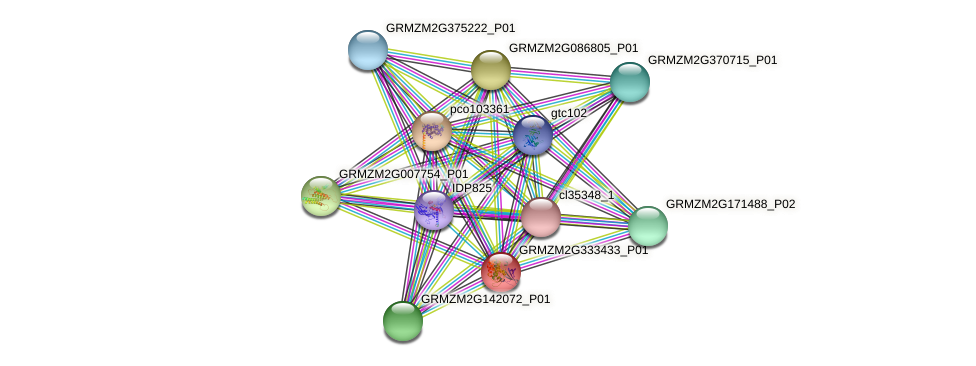 GRMZM2G333433_P01 protein (Zea mays) - STRING interaction network