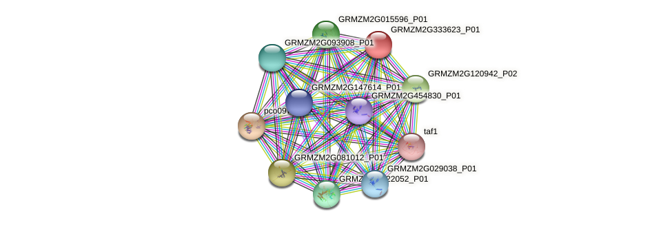 GRMZM2G333623_P01 protein (Zea mays) - STRING interaction network