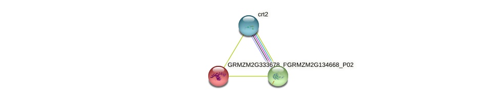 GRMZM2G333678_P01 protein (Zea mays) - STRING interaction network
