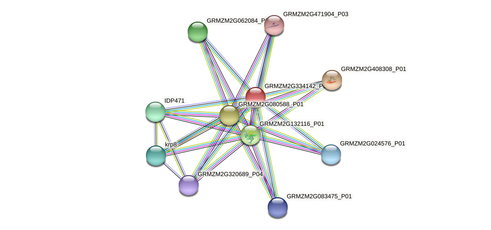 Zm.29087 protein (Zea mays) - STRING interaction network