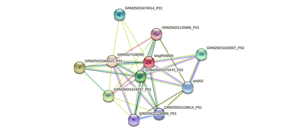 GRMZM2G334409_P01 protein (Zea mays) - STRING interaction network
