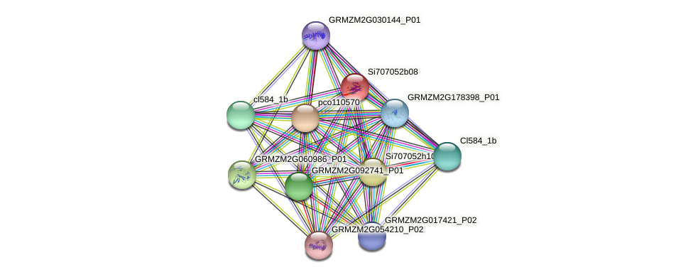 GRMZM2G335419_P01 protein (Zea mays) - STRING interaction network