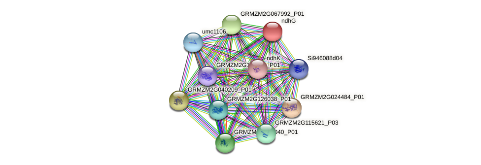 GRMZM2G335564_P02 protein (Zea mays) - STRING interaction network