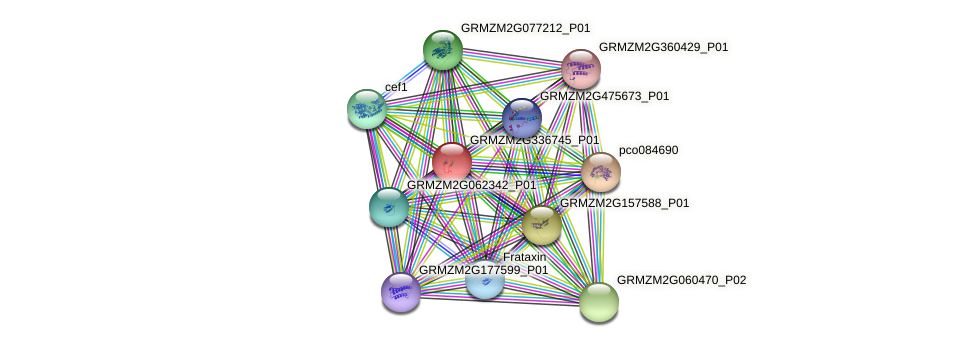 GRMZM2G336745_P01 protein (Zea mays) - STRING interaction network