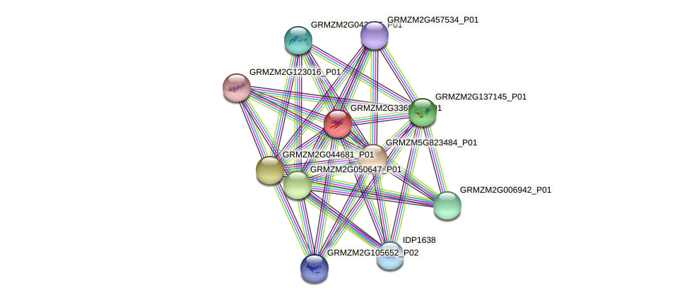 GRMZM2G336813_P01 protein (Zea mays) - STRING interaction network